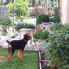 Ginger & Jake in the garden
