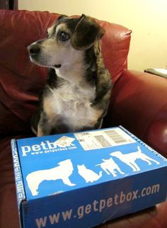 Reviews, Chews & How-Tos: Review/Giveaway: PetBox (for Dogs)