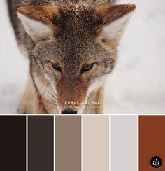 una paleta de colores zorro-inspirado // marrón oscuro, negro se desvaneció, coyote moreno, de color marrón claro, gris nieve, zorro rojo