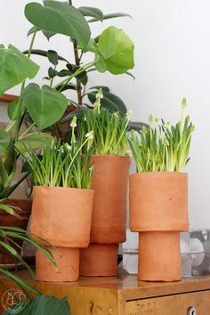 Oravanpesä   Helmililja l. helmihyasintti muscari Planter Pots, Diy, Instagram, Bricolage, Diys, Handyman Projects, Do It Yourself, Crafting