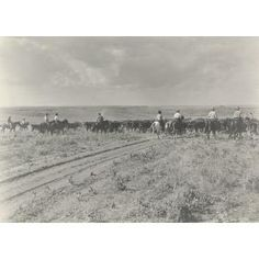 """The """"drag"""" (end of trail herd) moving along a trail., Erwin E. Smith, 1910, Dallas Museum of Art,"""