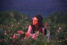 Frolic!: Bulgarian Rose Festival.