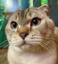 (📷 @nacethecat   ig) #petclubsa #nature #photography #catcontent #katzen #katzenliebe #catperson #catsoftheworld #cutekitten #instakatze #katt #cute #pet #petsofinstagram #catsofinstagram #catstagram #catoftheday #instacat #catlovers #instagood #catslove #catlover #caturday #thedailykitten #catlovers #catsofinsta #animals #adoptdontshop #worldofcutepets #cats 📍 Smartno pri Litiji Kittens Cutest, Cat Day, Cats Of Instagram, Pet Supplies, Cat Lovers, Nature Photography, Adoption, Cute Animals, Club
