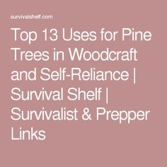 Top 13 Uses for Pine Trees in Woodcraft and Self-Reliance | Survival Shelf | Survivalist & Prepper Links
