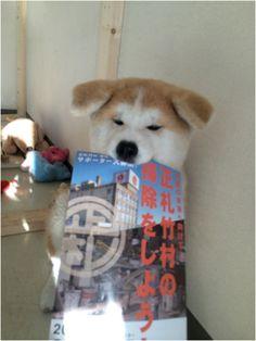 Awwwwww.....cutest dog ever!