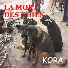 KORALa Mort Des ChienCD (limited edition)Music composed and played by Kora.Recorded at Kora Moune Studio. Fractions, The Borrowers, Archive, Studio, Movie Posters, Death, Dog, Film Poster, Studios