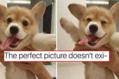 45 Dog Memes That Are Guaranteed To Put You In A Good Mood