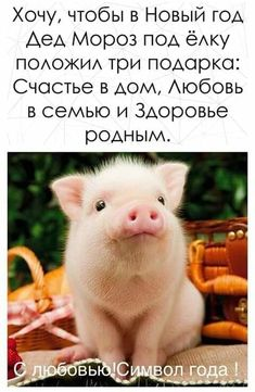 Year Of The Pig, Holidays And Events, Happy New Year, Greeting Cards, Lol, Thoughts, History, Drawings, Gifts