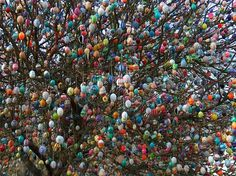 Volker Kraft's Easter Tree Decorated by 9,500 Eggs. Germany. Beautiful :)