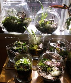 Terrariums & Fairy gardens