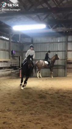 Cute Horses, Horse Love, Beautiful Horses, Hunter Horse, Horse Videos, Ranch Life, Show Jumping, Cute Funny Animals, Show Horses