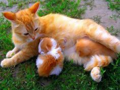 mama and  babies, are you sure they're yours???