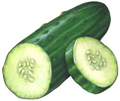 Vegetable illustration of a cut whole cucumber with a cut slice.