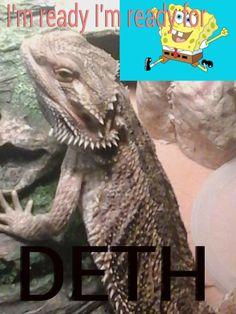 Sponge Bob hater