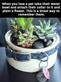When you lose a pet take their water bowl and attach their collar to it and plant a flower. This is a Great way to remember them. Someone sent it to us and we wanted to SHARE.so many of us have lost our furry family pets ! Animals And Pets, Cute Animals, Pet Remembrance, Dog Memorial, Memorial Ideas, Pet Loss, Pet Memorials, Losing A Pet, Dog Care