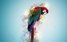 Beautiful Parrot Bird Wallpaper