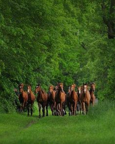 How Long Do Horses Live? How to tell a horse's age by its teeth? All The Pretty Horses, Beautiful Horses, Animals Beautiful, Arte Equina, Animals And Pets, Cute Animals, Wild Animals, Majestic Horse, All About Horses