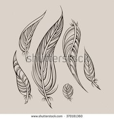 Vector set of different hand drawn feathers.