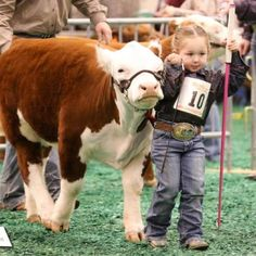 18 Adorable Cow Photos That Prove They Are Just Big Dogs - meowlogy Animals For Kids, Farm Animals, Cute Animals, Hereford Cattle, Mini Hereford, Show Cows, Cow Photos, Cow Pics, Pictures