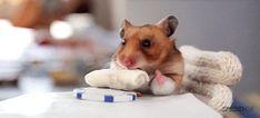 I modi di dire inglesi Vol. 2   Vita su Marte Burritos, Pet Rats, Pets, Hamster, Animals, Facebook Instagram, Email Address, Business Marketing, Weird