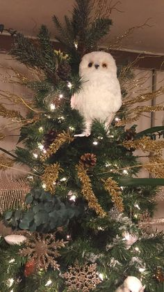 roost botanic owl tree toppers set of 3 christmas trees modish pinterest tree toppers owl and christmas time