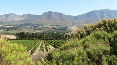 Wine tasting in the Hemel-en-Aarde Valley, South Africa Pinot Noir, Fine Wine, Heaven On Earth, Wine Tasting, Red Wine, South Africa, Vineyard, Tours, Explore