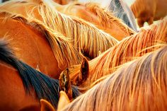 redheads by Ree Drummond / The Pioneer Woman, via Flickr