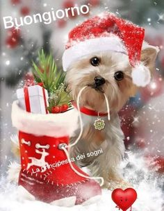 Diy Diamond Painting Cute Christmas Dog Sock Mosaic Cross Stitch Full Square Drill Diamond Painting Kit Home Decoration Gifts - Weihnachten Christmas Scenes, Christmas Images, Christmas And New Year, Christmas Time, Vintage Christmas, Christmas Cards, Merry Christmas, Christmas Ornaments, Beautiful Christmas Pictures