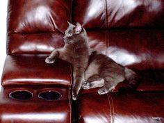 _________________КАНАДСКАЯ ПАНОРАМА Your Toronto: Почему ваш котик плохо себя ведёт?