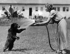 Cool down, bear!