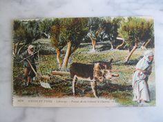 6367. Scénes et Types. Labourage. Femme Arabe trainant la Charrue.