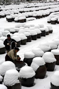 겨울에 된장옹기들 - Korean Bean Paste Jars During Winter