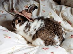 Cute bunny rabbit with Beatrix Potter style hat :).