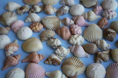 Fondant Sea Shells Cupcake or Cake Toppers.