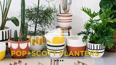Amber Interiors | POP + SCOTT Planters.