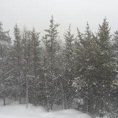 Ballade dans la forêt des Sources JoyeuseCharlevoix  by annemariemamie