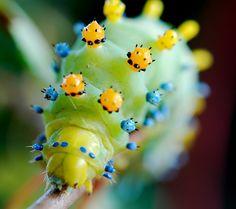 CATERPILLAR CLOSE UP by angeldewdrps, via Flickr