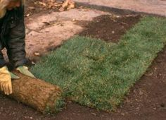 lay sod, landscap, how to lay a lawn, lawns, beauti lawn