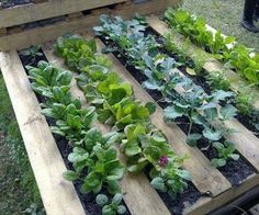 DIY Effortless Garden Boxes Made with Shipping Pallets via http://diypallets.com