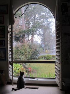 A cat in a window is so comforting!