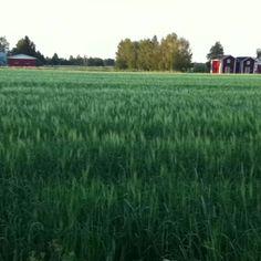 Finnish Summer night! It's 10pm