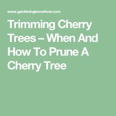 Trimming Cherry Trees – When And How To Prune A Cherry Tree