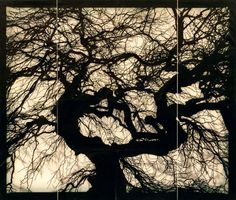 """Starn Brothers have this piece in a MOMA book, """"Speak For The Trees"""""""