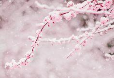 cherry blossom, japan, kawaii, pastel, pastel pink, pink, romantic, sakura, snow, snowy, winter