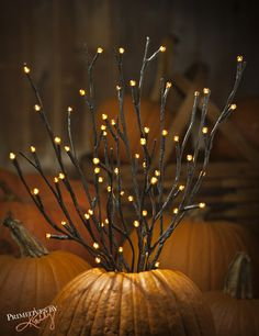 Halloween just got classier with twig lights that can easily be placed inside a carved out pumpkin.