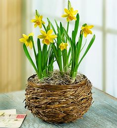 For only $24.99, make every day feel sunny and nostalgic with bright, yellow daffodils set in a unique bird's nest basket.