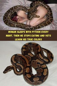 As animal lovers, it's easy to understand why people let their pets sleep with them in bed at night. Dogs and cats are soft and snuggly, so they make great cuddle partners. Even curling up with a ferret or a bunny rabbit isn't out of the ordinary. But, how about a python? One woman was sleeping with her pet python every single night — as you might imagine, it turns out that wasn't the best choice for a bedmate.