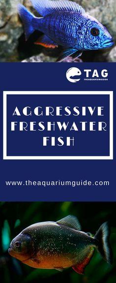 57 best aquarium care guide tag images fresh water soda