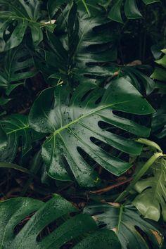 Dundee University Botanic Garden - from the Haarkon Greenhouse Tour. # Nature green The University of Dundee Botanic Garden Tapestry Nature, Tropical Houses, Green Plants, Tropical Plants, Tropical Forest, Tropical Leaves, Botanical Gardens, Planting Flowers, Greenery