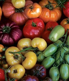 Looking forward to this new addition to the garden for 2012:  Tomato, Rainbow Heirloom Mix